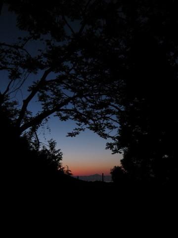 夜の森はおそろしい・・
